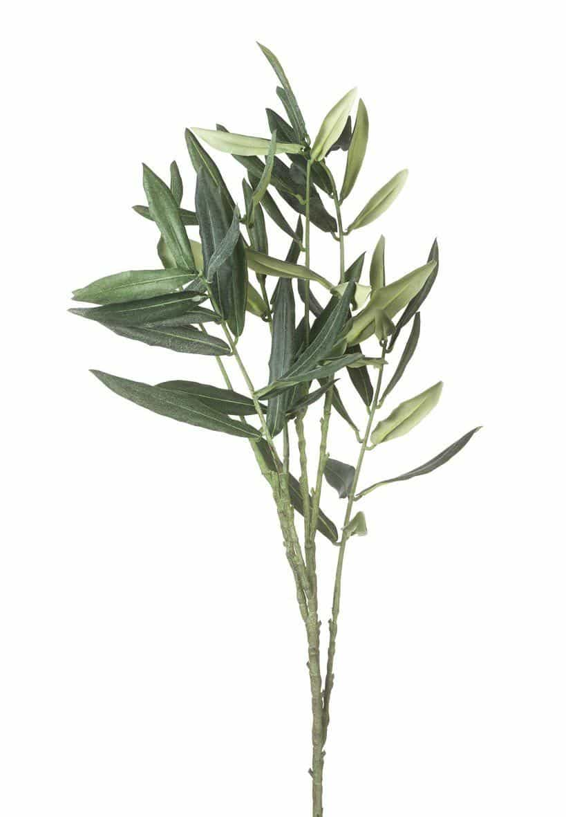 olive branch black singles Set of olive branch set of isolated olive branches on white  - free, high quality single olive branch clipart on clipartxtrascom cliparts and extras for teachers, students and parents by teachers and designers.
